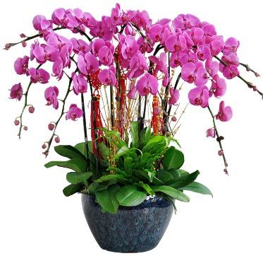 9 dallı mor orkide  Ordu cicekciler , cicek siparisi