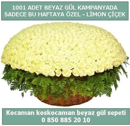 1001 adet beyaz gül sepeti özel kampanyada  Ordu çiçek yolla , çiçek gönder , çiçekçi