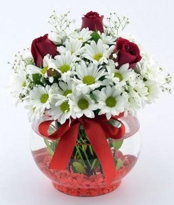 Fanusta 3 Gül ve Papatya  Ordu çiçekçi mağazası