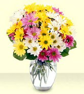 Ordu internetten çiçek satışı  mevsim çiçekleri mika yada cam vazo