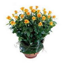 Ordu online çiçek gönderme sipariş  10 adet sari gül tanzim cam yada mika vazoda çiçek