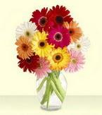 Ordu yurtiçi ve yurtdışı çiçek siparişi  cam yada mika vazoda 15 özel gerbera