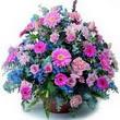 karisik mevsim kir çiçekleri  Ordu çiçek yolla , çiçek gönder , çiçekçi