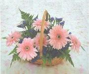 gerbera çiçeklerinde sepet   Ordu İnternetten çiçek siparişi