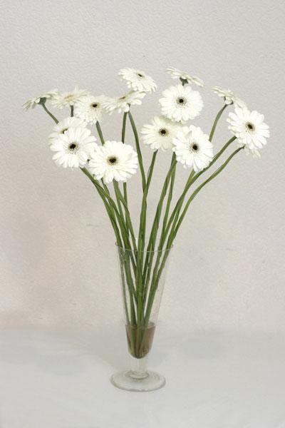 Ordu çiçek online çiçek siparişi  cam vazo içerisinde 17 adet sade gerbera