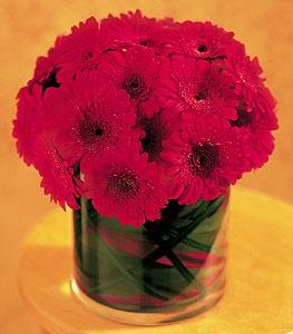 Ordu çiçek satışı  23 adet gerbera çiçegi sade ve sik cam içerisinde