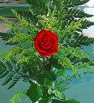 1 adet kirmizi gül buketi   Ordu çiçekçiler
