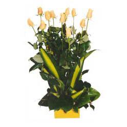 12 adet beyaz gül aranjmani  Ordu çiçek servisi , çiçekçi adresleri