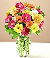 Ordu anneler günü çiçek yolla  17 adet karisik gerbera