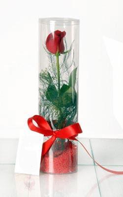 Ordu İnternetten çiçek siparişi  Silindir vazoda tek kirmizi gül