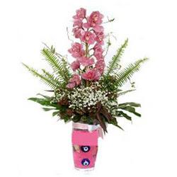 Ordu çiçek , çiçekçi , çiçekçilik  cam yada mika vazo içerisinde tek dal orkide çiçegi