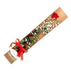 Ordu çiçekçi telefonları  Kutuda tek 1 adet kirmizi gül çiçegi