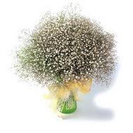 Ordu çiçek online çiçek siparişi  cam yada mika vazo içerisinde cipsofilya demeti