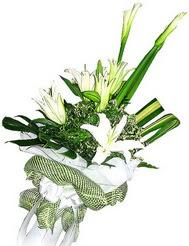 Ordu çiçek mağazası , çiçekçi adresleri  3 dal kazablanka çiçegi ve yesillikler