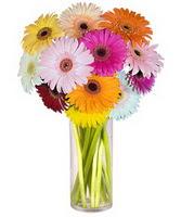 Ordu internetten çiçek satışı  Farkli renklerde 15 adet gerbera çiçegi