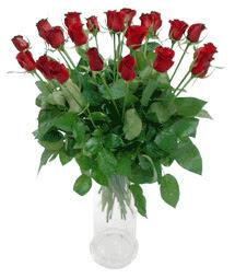 Ordu çiçek yolla  11 adet kimizi gülün ihtisami cam yada mika vazo modeli