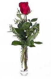 Vazo içerisinde 1 adet kirmizi gül  Ordu online çiçek gönderme sipariş