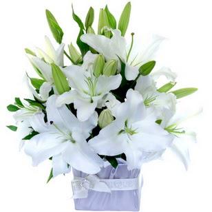 Ordu İnternetten çiçek siparişi  2 dal cazablanca vazo çiçeği