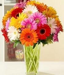 Ordu hediye sevgilime hediye çiçek  15 adet gerbera çiçek vazosu
