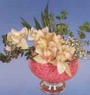 Ordu çiçek online çiçek siparişi  Dal orkide kalite bir hediye