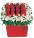Ordu çiçek gönderme sitemiz güvenlidir  Kare cam yada mika içinde kirmizi güller - anneler günü seçimi özel çiçek