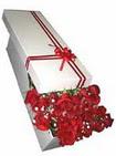 Ordu çiçek yolla  11 adet 1.kalite magnum güller