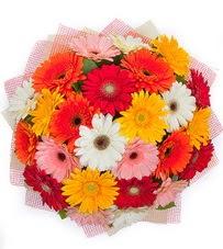 15 adet renkli gerbera buketi  Ordu kaliteli taze ve ucuz çiçekler