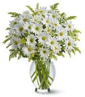 Vazo içerisinde beyaz krizantem çiçekleri  Ordu ucuz çiçek gönder