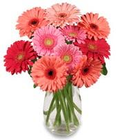 vazo içerisinde 13 adet gerbera çiçeği  Ordu hediye çiçek yolla