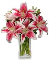 Vazo içerisinde 5 dal kazablanka çiçeği  Ordu online çiçek gönderme sipariş