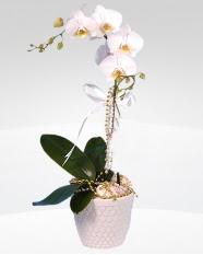 1 dallı orkide saksı çiçeği  Ordu güvenli kaliteli hızlı çiçek