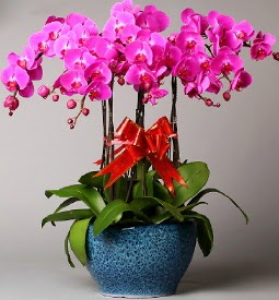 7 dallı mor orkide  Ordu anneler günü çiçek yolla