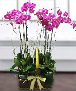 4 dallı mor orkide  Ordu çiçek mağazası , çiçekçi adresleri