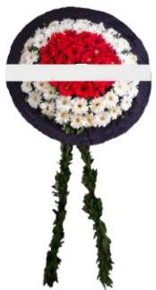 mozele çiçeği  Ordu 14 şubat sevgililer günü çiçek