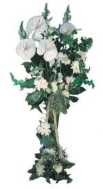 Ordu çiçek online çiçek siparişi  antoryumlarin büyüsü özel
