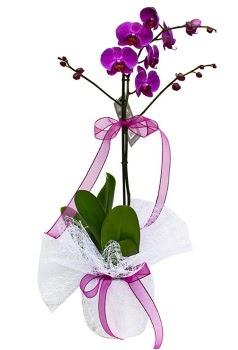 Tek dallı mor orkide  Ordu çiçek yolla