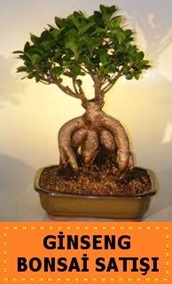 Ginseng bonsai satışı japon ağacı  Ordu çiçek siparişi vermek