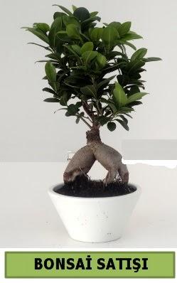 Bonsai japon ağacı satışı  Ordu hediye sevgilime hediye çiçek