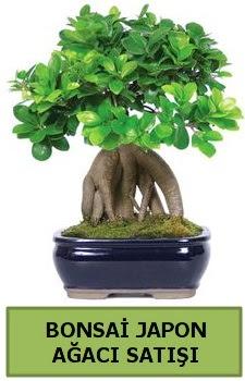 Bonsai japon ağacı satışı  Ordu çiçek gönderme