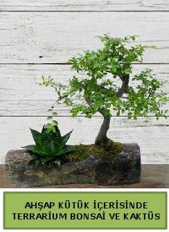 Ahşap kütük bonsai kaktüs teraryum  Ordu internetten çiçek satışı