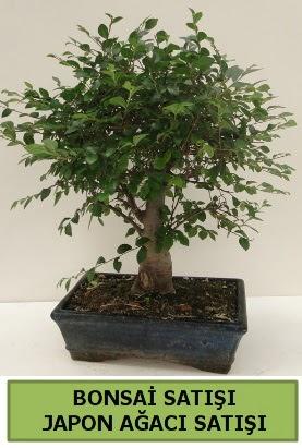 Minyatür bonsai japon ağacı satışı  Ordu çiçek yolla , çiçek gönder , çiçekçi