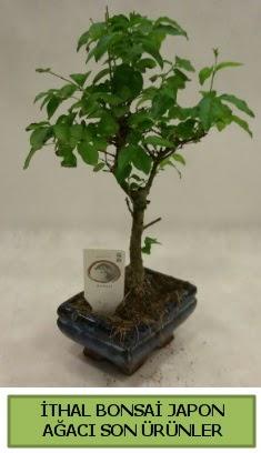 İthal bonsai japon ağacı bitkisi  Ordu 14 şubat sevgililer günü çiçek