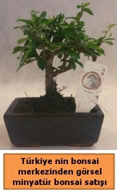 Japon ağacı bonsai satışı ithal görsel  Ordu İnternetten çiçek siparişi