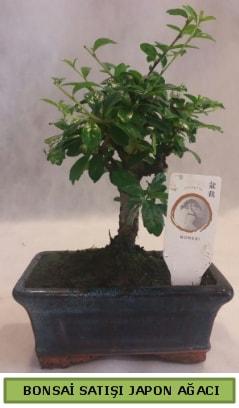 Minyatür bonsai ağacı satışı  Ordu çiçek gönderme sitemiz güvenlidir