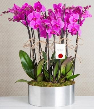 11 dallı mor orkide metal vazoda  Ordu çiçek yolla , çiçek gönder , çiçekçi