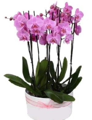 Beyaz seramik içerisinde 7 dallı mor orkide  Ordu çiçek yolla