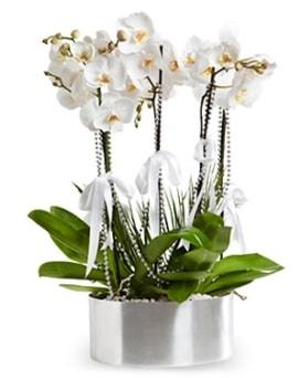 Beş dallı metal saksıda beyaz orkide  Ordu İnternetten çiçek siparişi