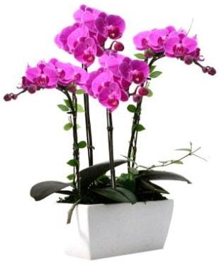 Seramik vazo içerisinde 4 dallı mor orkide  Ordu çiçek gönderme