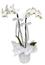 2 dallı beyaz orkide  Ordu çiçek mağazası , çiçekçi adresleri