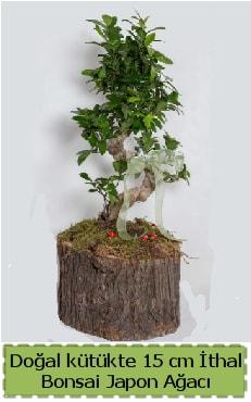 Doğal kütükte İthal bonsai japon ağacı  Ordu çiçek gönderme sitemiz güvenlidir